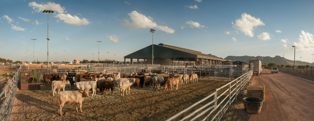 Queen Creek Cattle Farm