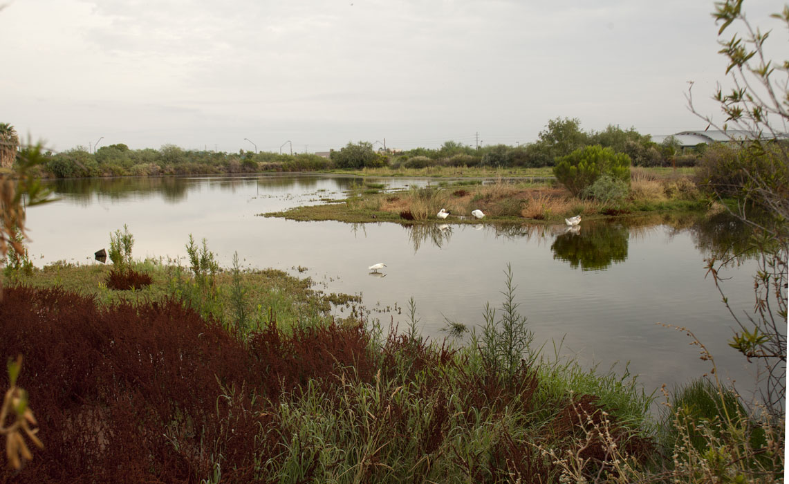 Riparian Preserve in Gilbert